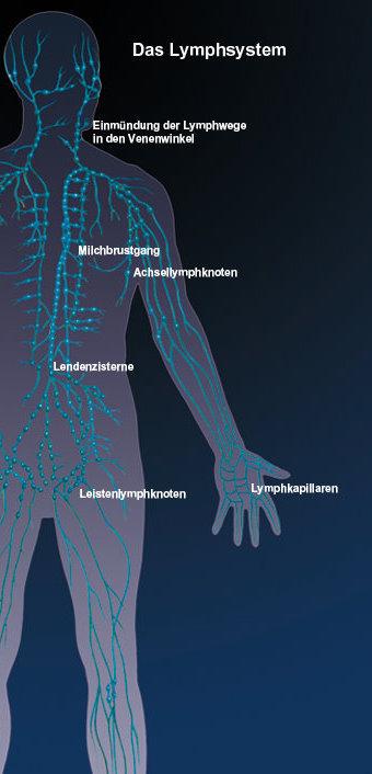 Lymphome: Gefährliche Vergrößerung